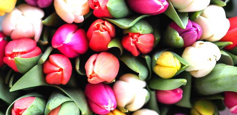 Wedding Flowers - Tulips